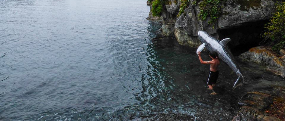Artist Colton Hash walking his orca sculpture into the ocean