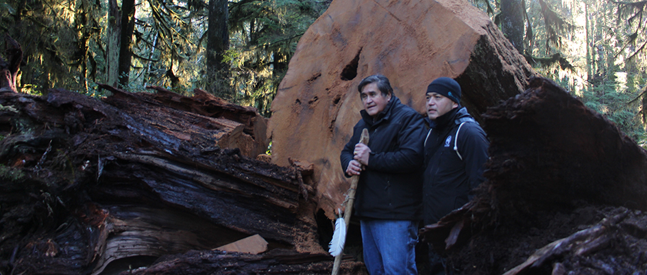 Master Carver Tim Paul and Edward Johnson Jr. standing next to the fallen cedar
