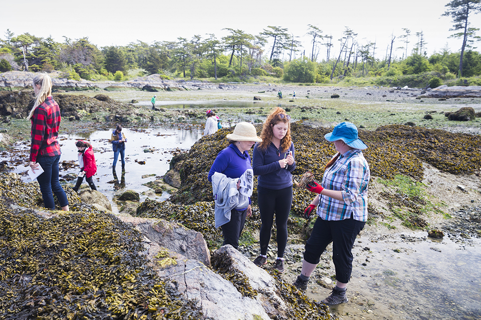 People examining tide pools by the shoreline