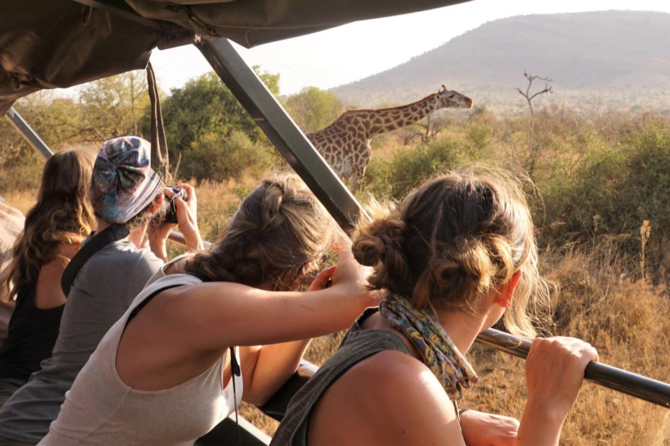 Students look out from a jeep at a giraffe on a safari
