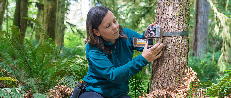 Melanie Clapham sets up a camera trap to record individual grizzly bears for research and monitoring